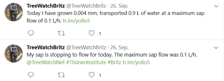 TreeWatchBitz