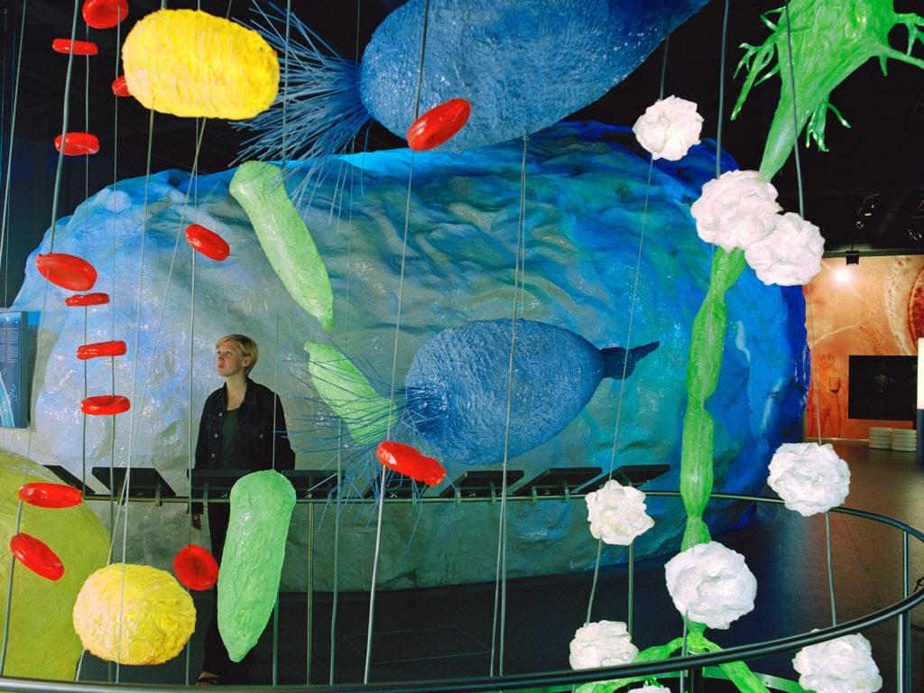 Installation aus Nachbildungen der Zellorganellen in unterschiedlichen Formen und Farben